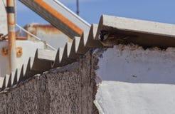 Moineau dans son nid sur un toit images libres de droits