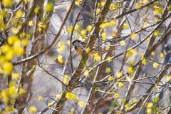 Moineau de Chambre sur une branche d'arbre image stock