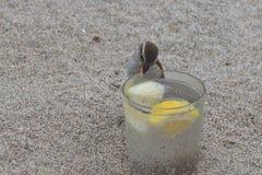 Moineau sauvage buvant d'un verre de genièvre et de tonique image stock