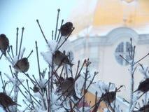 Moineaux dans le Pochaev Lavra Images libres de droits