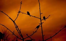 Moineaux sur le coucher du soleil Image libre de droits