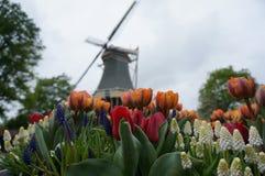 Moinho atrás das flores Foto de Stock Royalty Free