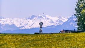 Moinho de vento, campo de flor amarelo e montanhas nevado em Sunny Sprin fotografia de stock royalty free
