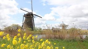 Moinho de vento de Kinderdijk video estoque
