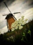Moinho de vento de Kinderdijk Foto de Stock