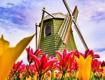 Moinho de vento do fest da tulipa em Washington imagem de stock royalty free