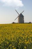Moinho de vento e colza Imagens de Stock Royalty Free