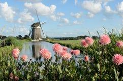 Moinho de vento e flores na Holanda Fotos de Stock Royalty Free