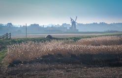 Moinho de vento e juncos em Norfolk norte, Inglaterra imagens de stock royalty free