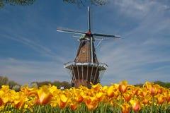 Moinho de vento e Tulips Imagem de Stock Royalty Free