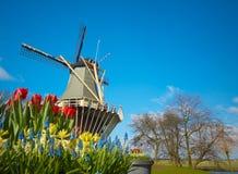 Moinho de vento e tulips holandeses fotografia de stock royalty free