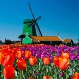 Moinho de vento em holland Fotos de Stock