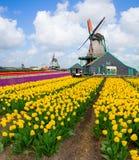 Moinho de vento holandês sobre o campo das tulipas Imagens de Stock Royalty Free