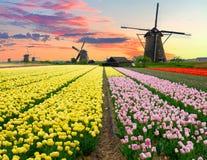 Moinho de vento holandês sobre o campo das tulipas Foto de Stock