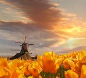 Moinho de vento holandês tradicional com as tulipas em Zaanse Schans, área de Amsterdão, Holanda Fotografia de Stock Royalty Free