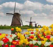 Moinho de vento holandês sobre o campo das tulipas Fotos de Stock Royalty Free