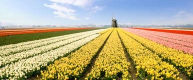 Moinho de vento Holland foto de stock