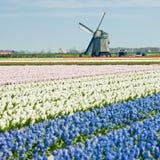 Moinho de vento, Países Baixos Fotos de Stock