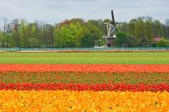 Moinho e tulipfield Fotos de Stock Royalty Free