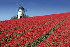 Moinho holandês e tulips vermelhos imagens de stock royalty free