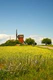 Moinhos de vento e campo com chicória Foto de Stock Royalty Free