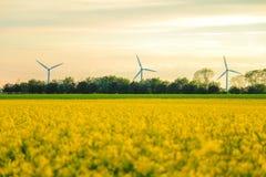 Moinhos de vento e campo da colza Imagens de Stock Royalty Free