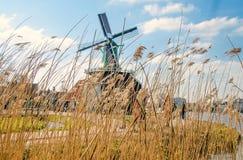 Moinhos de vento holandeses na grama seca a Imagem de Stock Royalty Free
