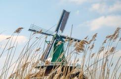Moinhos de vento holandeses na grama seca Imagens de Stock Royalty Free