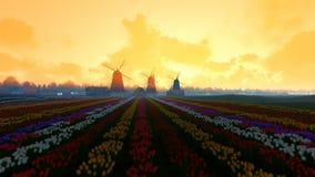 Moinhos de vento holandeses tradicionais com as tulipas vibrantes no primeiro plano, névoa da manhã, inclinação filme
