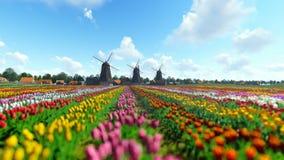 Moinhos de vento holandeses tradicionais com as tulipas vibrantes no primeiro plano sobre o céu azul vídeos de arquivo