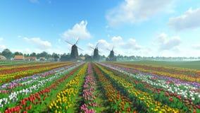 Moinhos de vento holandeses tradicionais com as tulipas vibrantes no primeiro plano sobre o céu azul, inclinação filme