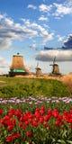 Moinhos de vento na Holanda Foto de Stock