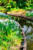 Moinhos velhos do adnd do campo da tulipa no netherland Fotos de Stock Royalty Free