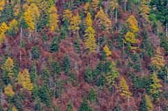 Mointain trees in autumn. Trees of different colours (green, yellow, red) on the mountains in autumn. Photo taken in October 2016 in Cave del Predil, Italy Stock Photo