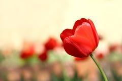Mois de floraison de ressort photo stock