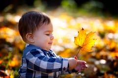 8 mois de garçon en automne Image stock