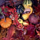 Moisson d'automne Images libres de droits