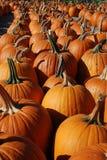 Moisson d'automne Photos libres de droits