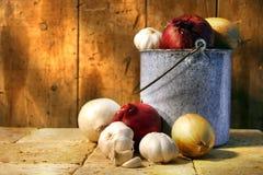 Moisson d'oignon Photographie stock