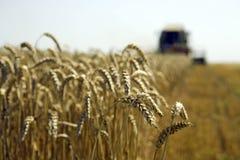 Moisson de blé Image libre de droits
