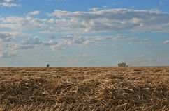 Moisson de blé Image stock