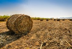 Moisson de canne à sucre en Thaïlande Photos stock