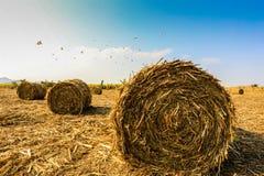 Moisson de canne à sucre en Thaïlande Photo libre de droits