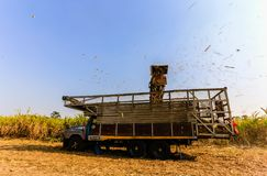 Moisson de canne à sucre en Thaïlande Photo stock