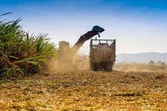 Moisson de canne à sucre en Thaïlande Photos libres de droits