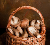 Moisson de champignons de couche images libres de droits