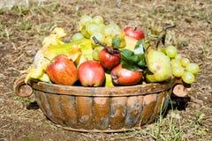 Moisson de fruits Image libre de droits