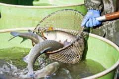 Moisson de l'étang Image stock
