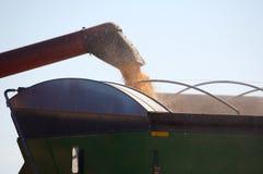 Moisson de maïs images libres de droits