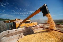 Moisson de maïs Photo libre de droits